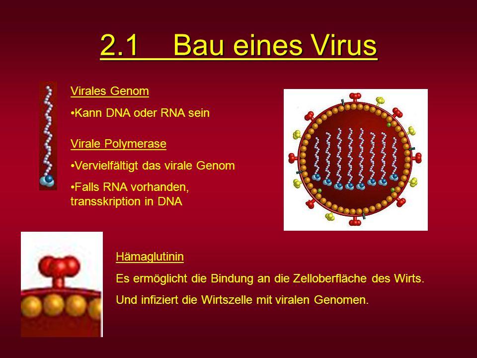 Virales Genom Kann DNA oder RNA sein Virale Polymerase Vervielfältigt das virale Genom Falls RNA vorhanden, transskription in DNA Hämaglutinin Es ermö
