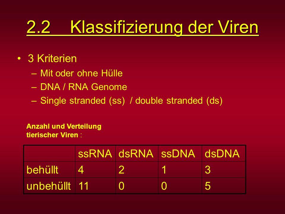 2.2 Klassifizierung der Viren 3 Kriterien –Mit oder ohne Hülle –DNA / RNA Genome –Single stranded (ss) / double stranded (ds) ssRNAdsRNAssDNAdsDNA beh