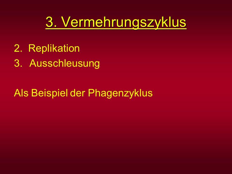 3. Vermehrungszyklus 2. Replikation 3.Ausschleusung Als Beispiel der Phagenzyklus