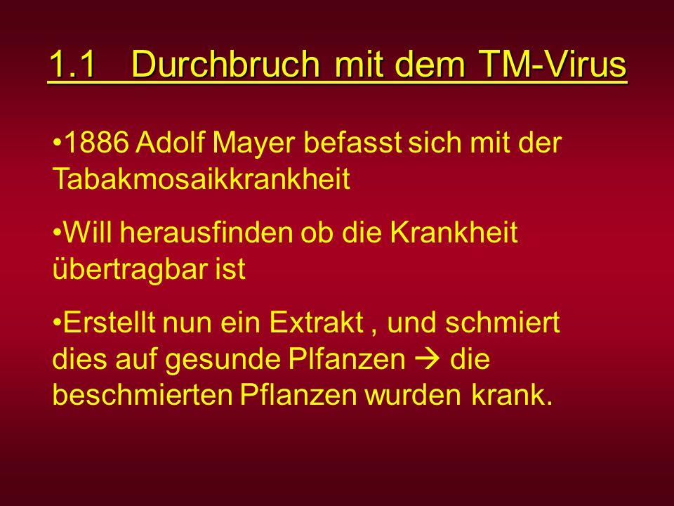 1.1 Durchbruch mit dem TM-Virus 1886 Adolf Mayer befasst sich mit der Tabakmosaikkrankheit Will herausfinden ob die Krankheit übertragbar ist Erstellt nun ein Extrakt, und schmiert dies auf gesunde Plfanzen  die beschmierten Pflanzen wurden krank.