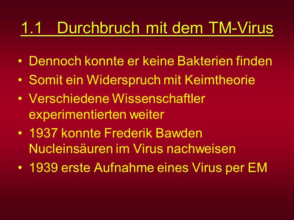 1.1 Durchbruch mit dem TM-Virus Dennoch konnte er keine Bakterien finden Somit ein Widerspruch mit Keimtheorie Verschiedene Wissenschaftler experimentierten weiter 1937 konnte Frederik Bawden Nucleinsäuren im Virus nachweisen 1939 erste Aufnahme eines Virus per EM