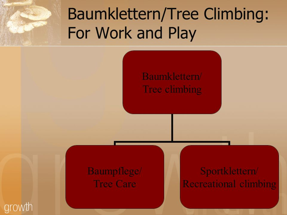 Evolution of Tree Climbing in Germany Mostly lifts used until relatively recently SKT- Seilklettertechnik Creative development of SKT through: New knots Organized, regulated training Participation in ITCC