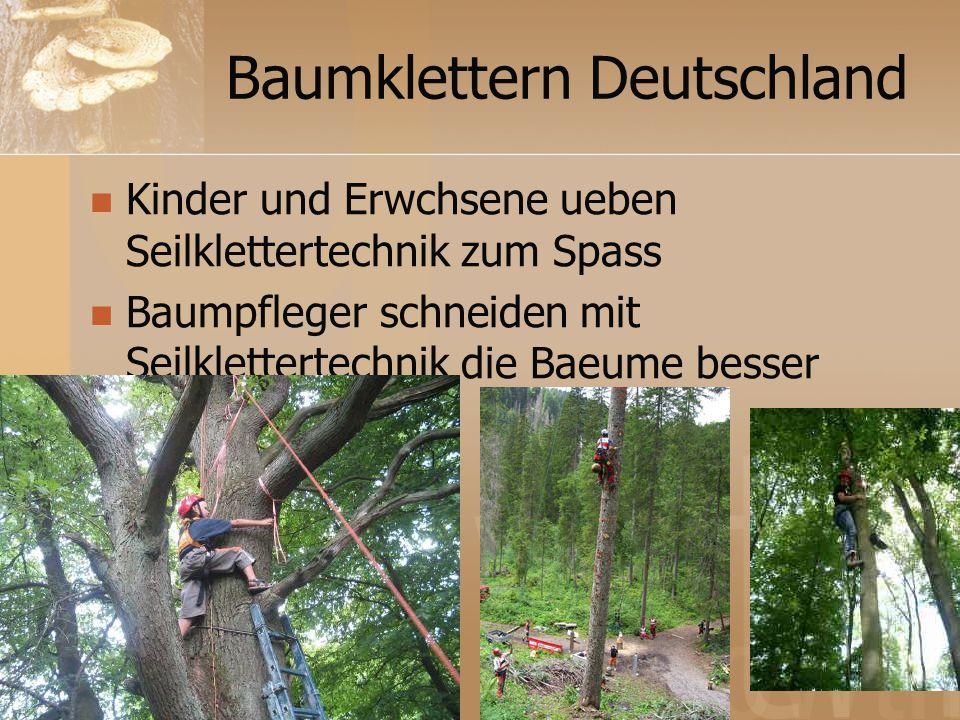 Baumklettern Deutschland Kinder und Erwchsene ueben Seilklettertechnik zum Spass Baumpfleger schneiden mit Seilklettertechnik die Baeume besser