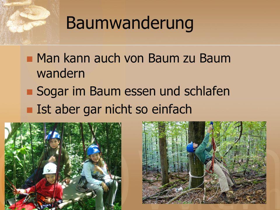 Baumwanderung Man kann auch von Baum zu Baum wandern Sogar im Baum essen und schlafen Ist aber gar nicht so einfach