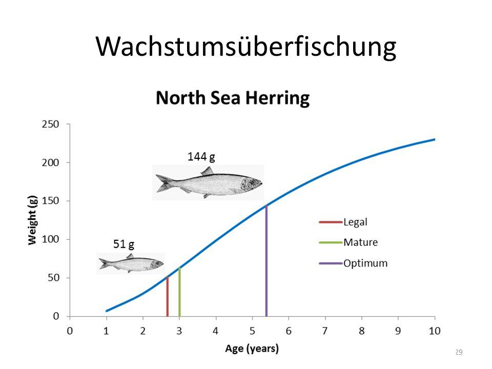Wachstumsüberfischung 29