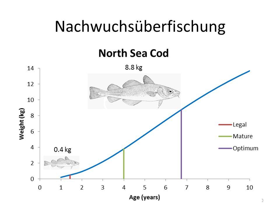 30 Nachwuchsüberfischung