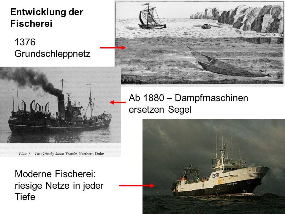 1)Misswirtschaft: Mit viel zu hohem Aufwand wird mehr entnommen als nachwächst 2)Die Fische werden gefangen, bevor sie wachsen und sich fortpflanzen können Ursachen der globalen Überfischung