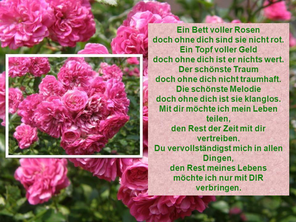 Ein Bett voller Rosen doch ohne dich sind sie nicht rot.