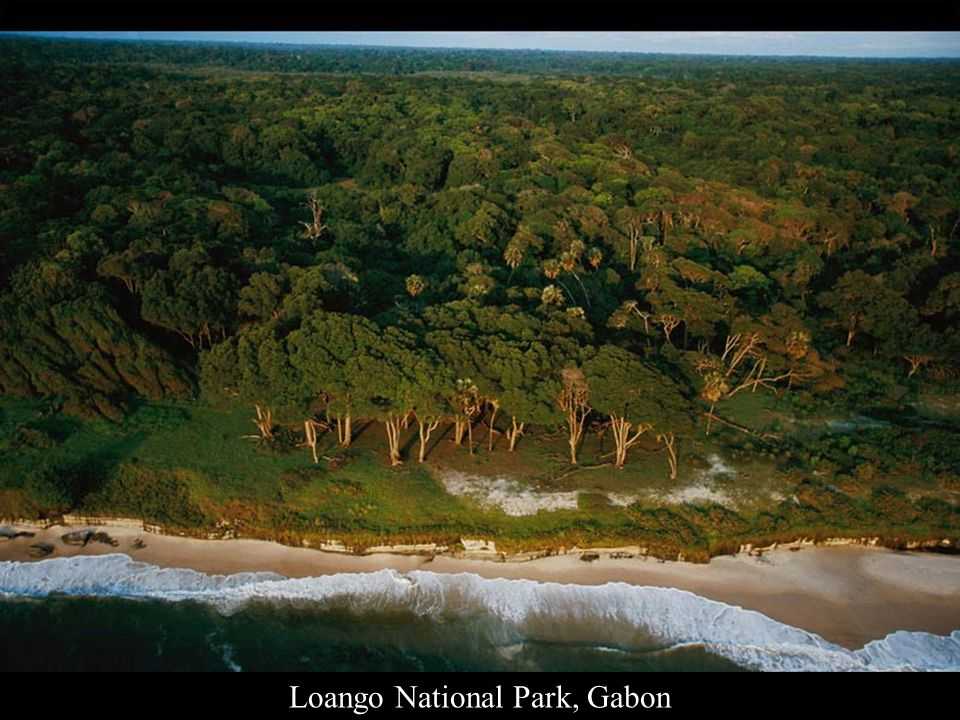 Léfini Faunal Reserve, Republic of the Congo, Africa
