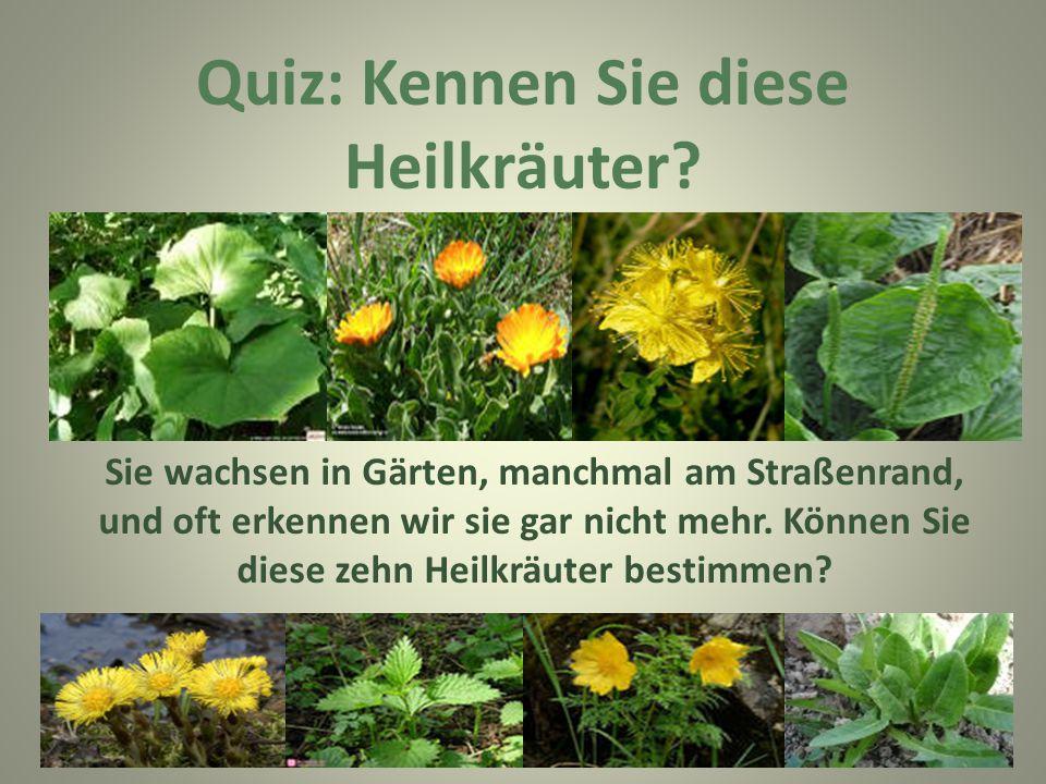 Quiz: Kennen Sie diese Heilkräuter? Sie wachsen in Gärten, manchmal am Straßenrand, und oft erkennen wir sie gar nicht mehr. Können Sie diese zehn Hei