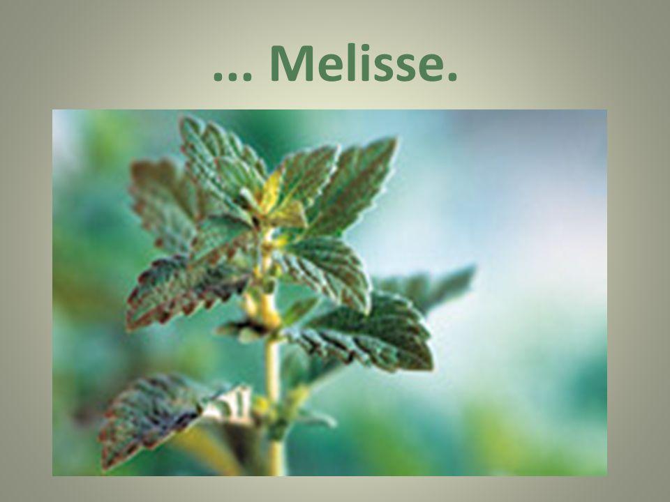 ... Melisse.