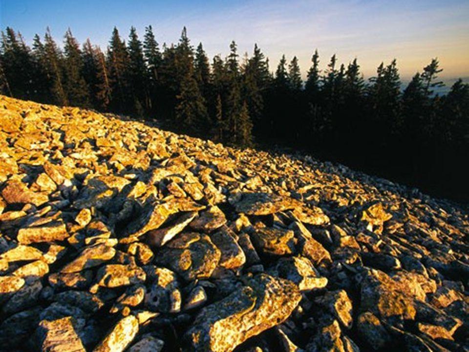 Bayerischer Wald Der 1373 Meter hohe Lusengipfel ist übersät mit Granitblockfelsen.