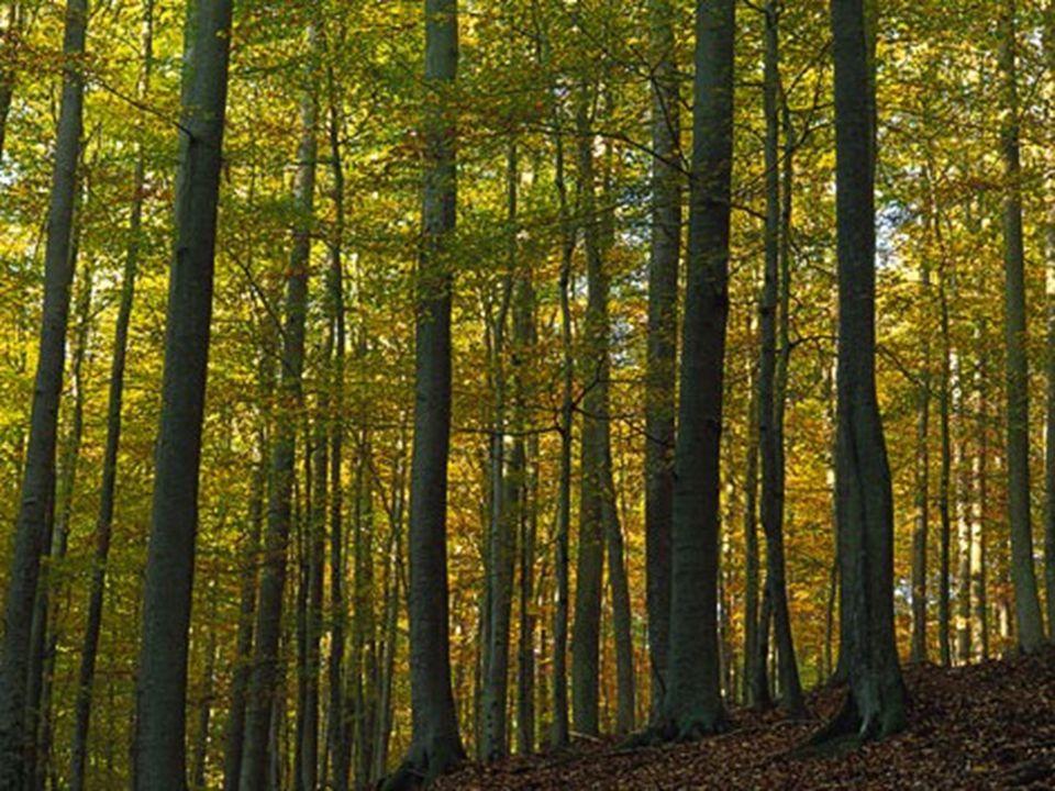 Kellerwald-Edersee 1894 wurde das frühere Hofjagdrevier mit einem Gatter umgeben.