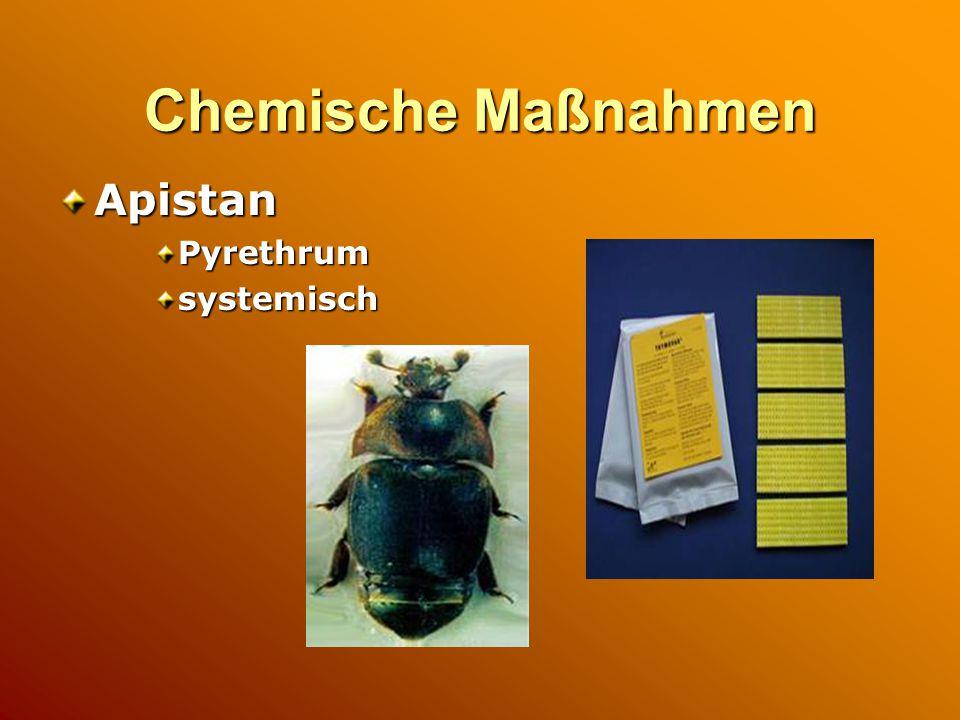 Chemische Maßnahmen ApistanPyrethrumsystemisch