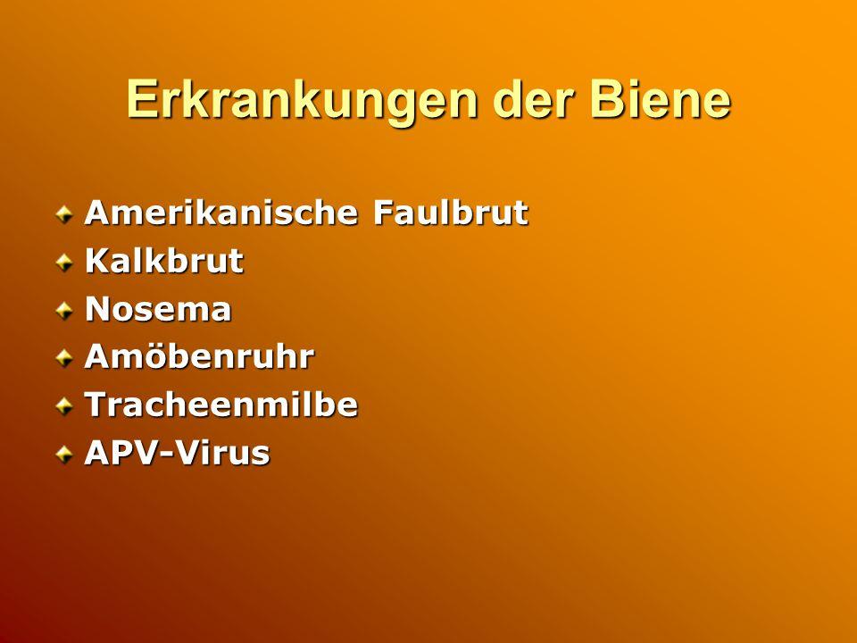 Erkrankungen der Biene Amerikanische Faulbrut KalkbrutNosemaAmöbenruhrTracheenmilbeAPV-Virus