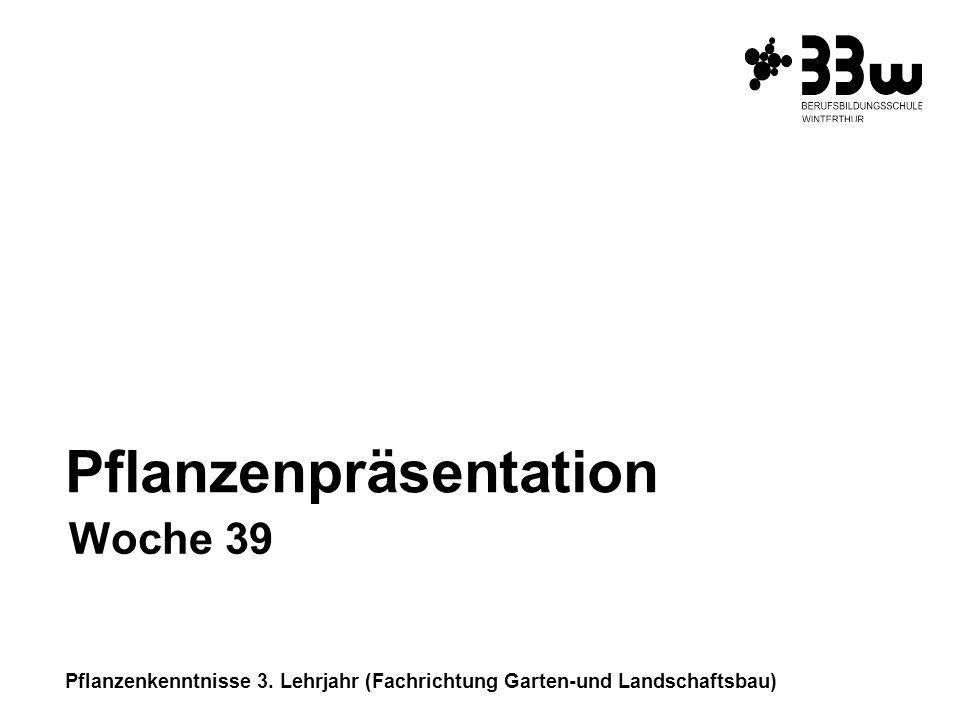 Pflanzenkenntnisse 3. Lehrjahr (Fachrichtung Garten-und Landschaftsbau) Pflanzenpräsentation Woche 39