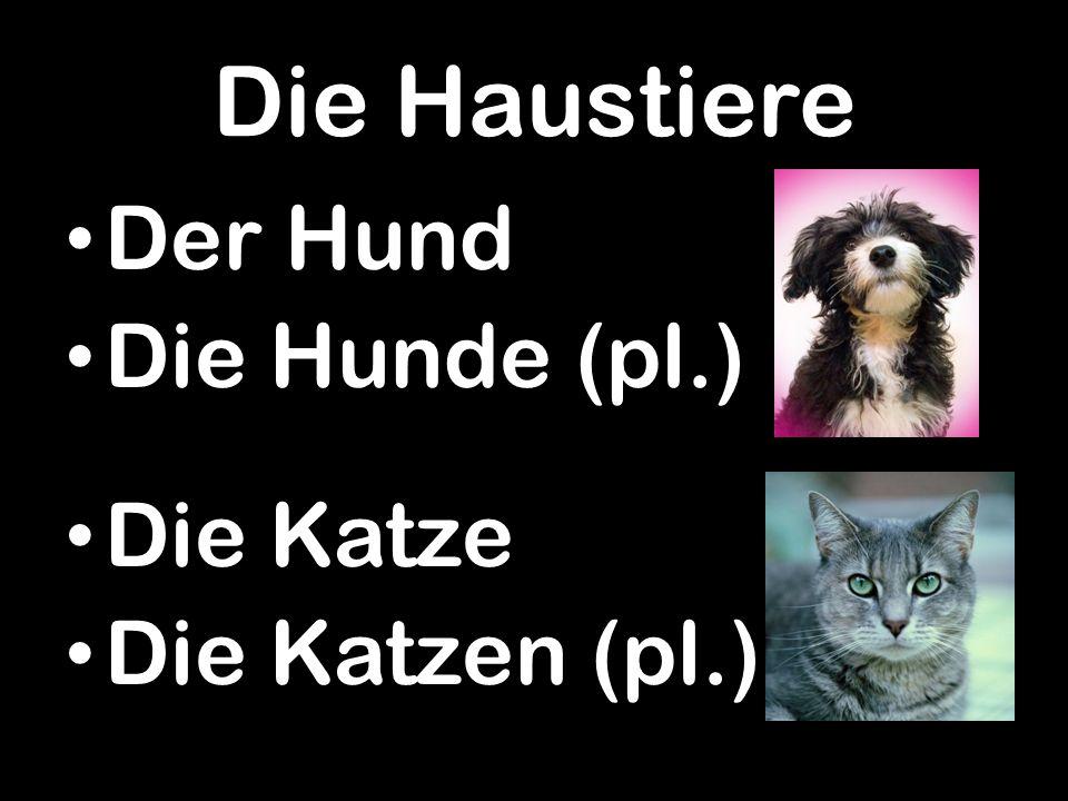 Die Haustiere Der Hund Die Hunde (pl.) Die Katze Die Katzen (pl.)