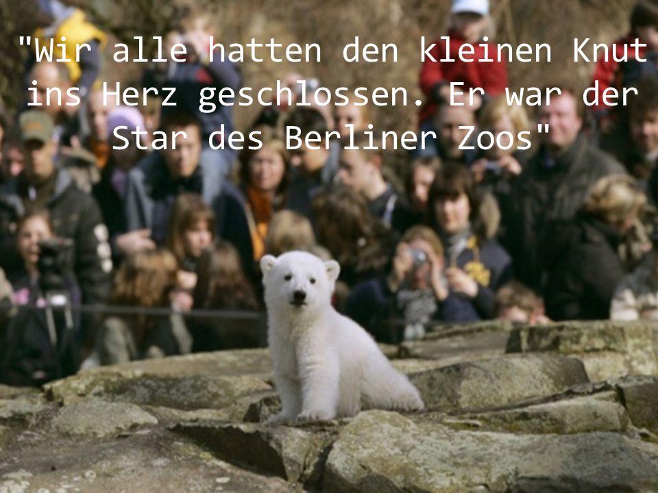 Deutschland trauert ! Der weltbekannte Eisbär war am Samstag kurz nach 15 Uhr in seinem Wasserbecken gestorben.