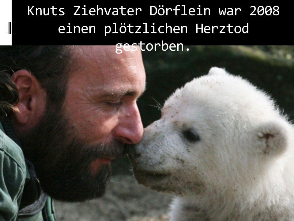 """Beide waren Weltberühmt geworden. """"Nun seid ihr wieder vereint - Thomas Dörflein und Knut"""