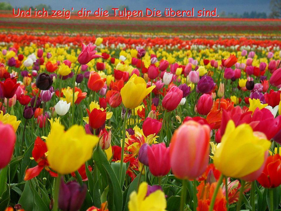 Und ich zeig dir die Tulpen Die ü beral sind.