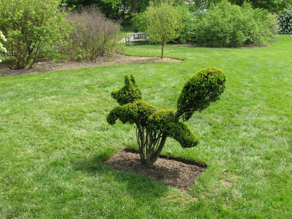 """Gartenkunst Kunstvolle Schnitte im Garten... Música: Ernesto Cortázar, """"En la Cima Del Mundo"""""""
