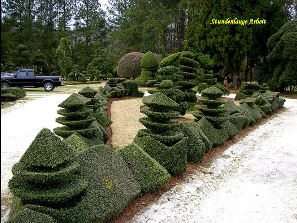 Korkenzieher und hohe Gartenkunst