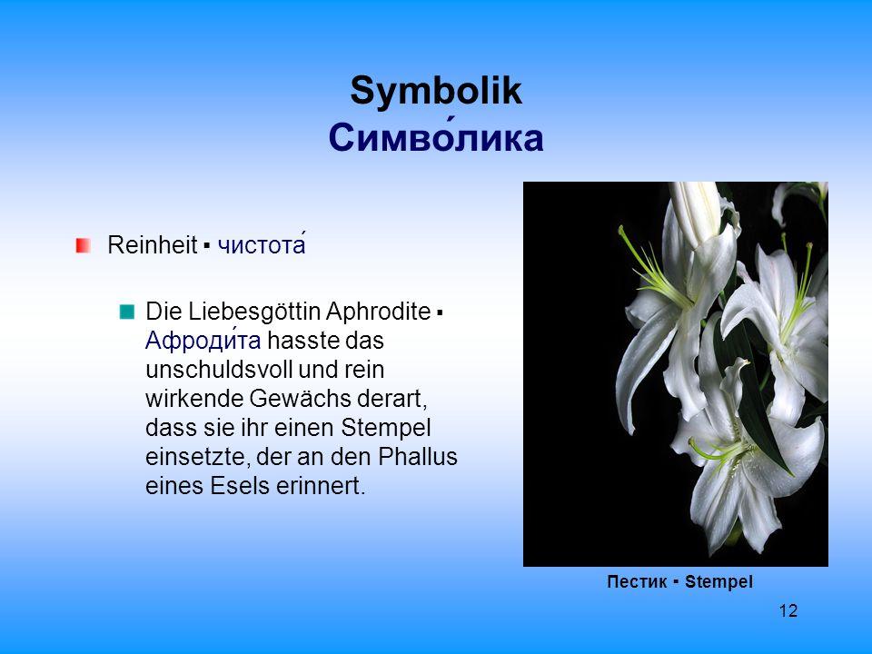 13 Symbolik Cимволика Лилия ▪ Lilie Liebe ▪ любовь Schönheit ▪ красота Die Schönheit einer Frau wird oft mit der Lilie verglichen: белый и нежный, как лилия ▪ weiß und zart wie eine Lilie oder лилейный ▪ lilienweiß.