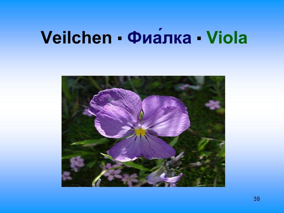40 Allgemeine Information О́бщая информа́ция Фиалка ▪ Veilchen Der Terminus stammt aus dem Lateinischen: viola, das aus der gleichen Quelle stammt, wie gr.