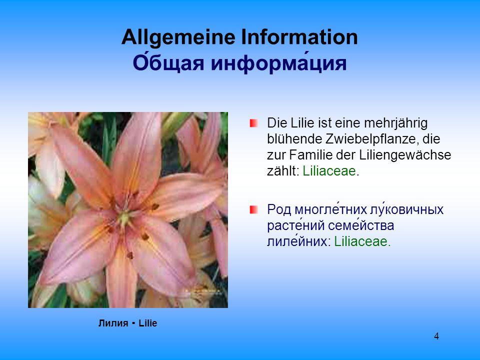 5 Allgemeine Information О́бщая информа́ция Sie zählt neben Lotos ▪ лотос und Rose ▪ роза zu den Blumen, die allein durch ihre Schönheit zu Symbolen wurden.