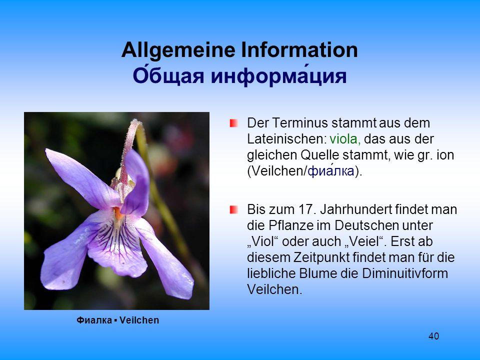 41 Allgemeine Information О́бщая информа́ция Das Veilchen gehört zur Familie der Veilchengewächse: Violaceae.