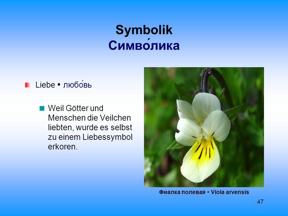48 Aberglaube Суеверие Ултима Морфо ▪ Viola ultimo morpho Man soll die ersten 3 Veilchenblüten, die man im Jahr findet, verschlucken, um das Jahr über gegen Fieber und andere Krankheiten gefeit zu sein.