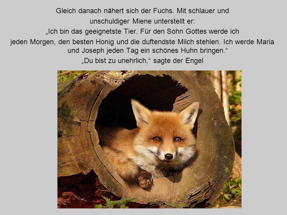 Gleich danach nähert sich der Fuchs.