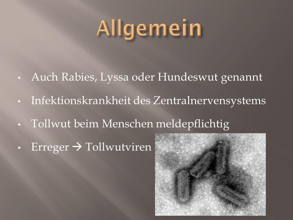 Auch Rabies, Lyssa oder Hundeswut genannt Infektionskrankheit des Zentralnervensystems Tollwut beim Menschen meldepflichtig Erreger  Tollwutviren