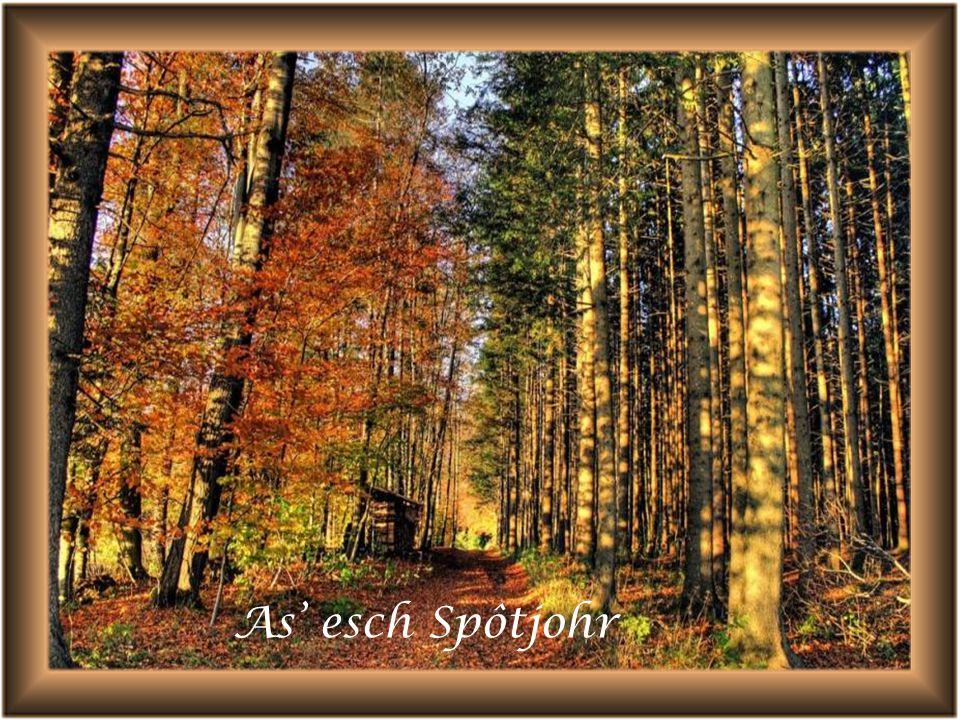 De Wald zeit sich in de Scheenschte Tracht D Blätter han alli Farwe, un met em Sunnestrâhl Esch's a wâhri Pracht.
