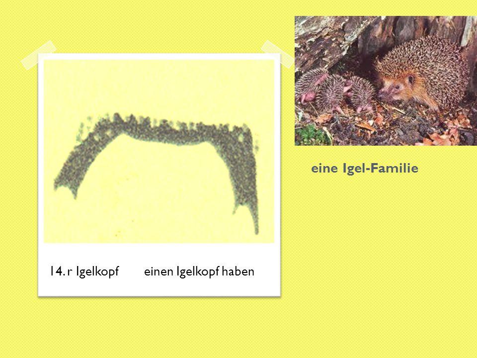 eine Igel-Familie 14. r Igelkopfeinen Igelkopf haben