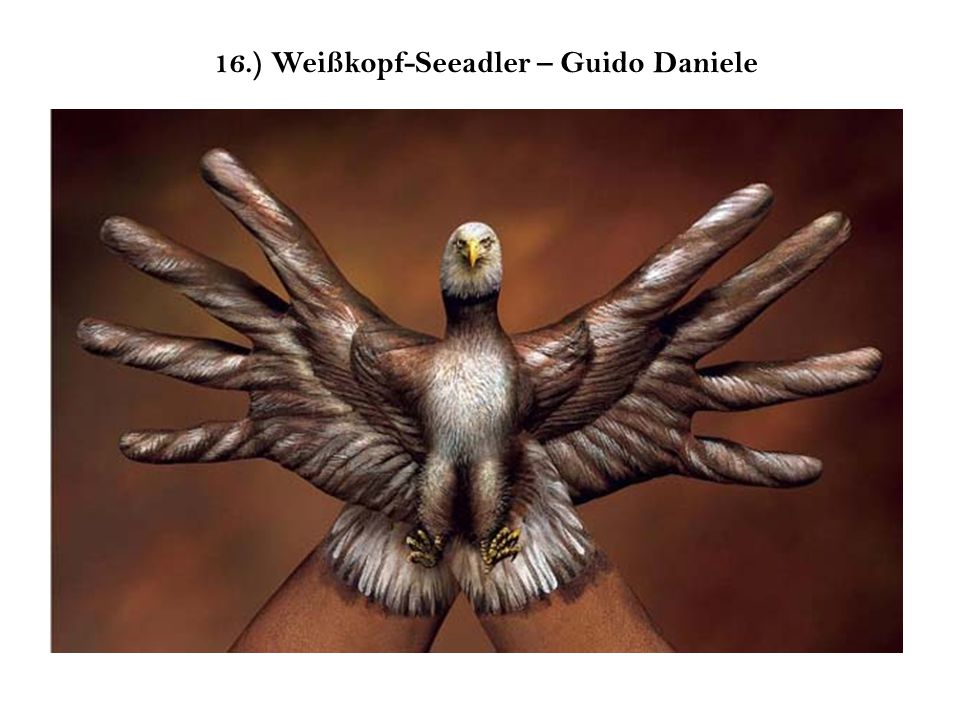 16.) Weißkopf-Seeadler – Guido Daniele