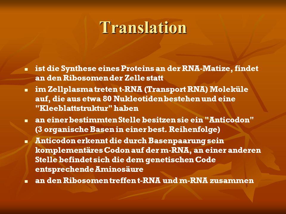 Translation ist die Synthese eines Proteins an der RNA-Matize, findet an den Ribosomen der Zelle statt im Zellplasma treten t-RNA (Transport RNA) Mole
