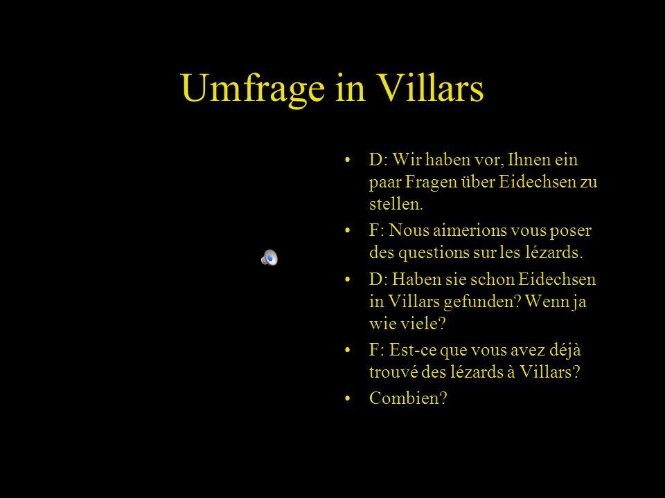 Umfrage in Villars D: Wir haben vor, Ihnen ein paar Fragen über Eidechsen zu stellen.