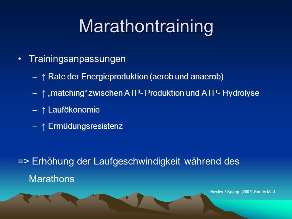 """Marathontraining –↑ Rate der Energieproduktion (aerob und anaerob) –↑ """"matching"""" zwischen ATP- Produktion und ATP- Hydrolyse –↑ Laufökonomie –↑ Ermüdu"""