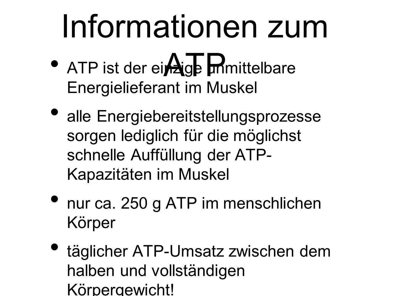 Informationen zum ATP ATP ist der einzige unmittelbare Energielieferant im Muskel alle Energiebereitstellungsprozesse sorgen lediglich für die möglichst schnelle Auffüllung der ATP- Kapazitäten im Muskel nur ca.
