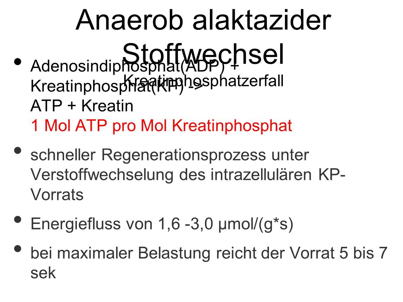 Anaerob alaktazider Stoffwechsel Kreatinphosphatzerfall Adenosindiphosphat(ADP) + Kreatinphosphat(KP) -> ATP + Kreatin 1 Mol ATP pro Mol Kreatinphosphat schneller Regenerationsprozess unter Verstoffwechselung des intrazellulären KP- Vorrats Energiefluss von 1,6 -3,0 μmol/(g*s) bei maximaler Belastung reicht der Vorrat 5 bis 7 sek