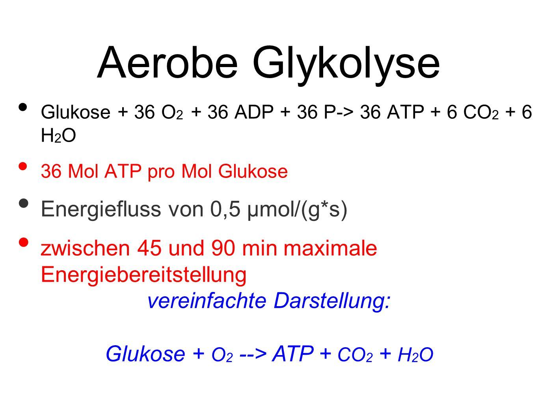 Aerobe Glykolyse Glukose + 36 O 2 + 36 ADP + 36 P-> 36 ATP + 6 CO 2 + 6 H 2 O 36 Mol ATP pro Mol Glukose Energiefluss von 0,5 μmol/(g*s) zwischen 45 und 90 min maximale Energiebereitstellung vereinfachte Darstellung: Glukose + O 2 --> ATP + CO 2 + H 2 O