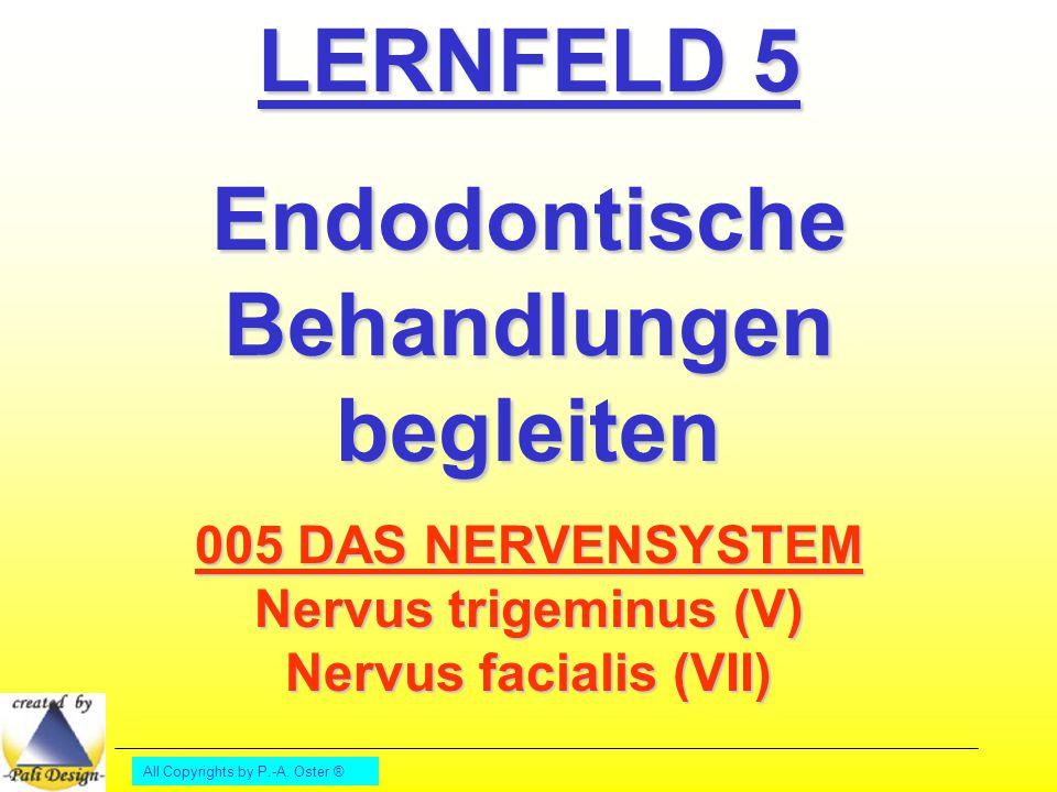 All Copyrights by P.-A. Oster ® LERNFELD 5 Endodontische Behandlungen begleiten 005 DAS NERVENSYSTEM Nervus trigeminus (V) Nervus facialis (VII)
