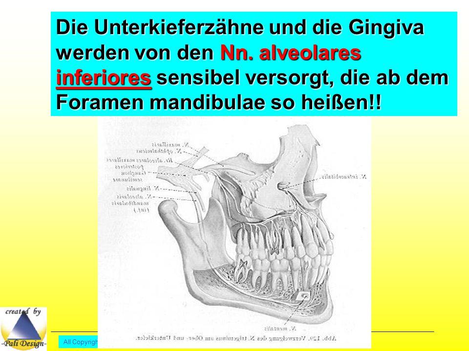 Die Unterkieferzähne und die Gingiva werden von den Nn.