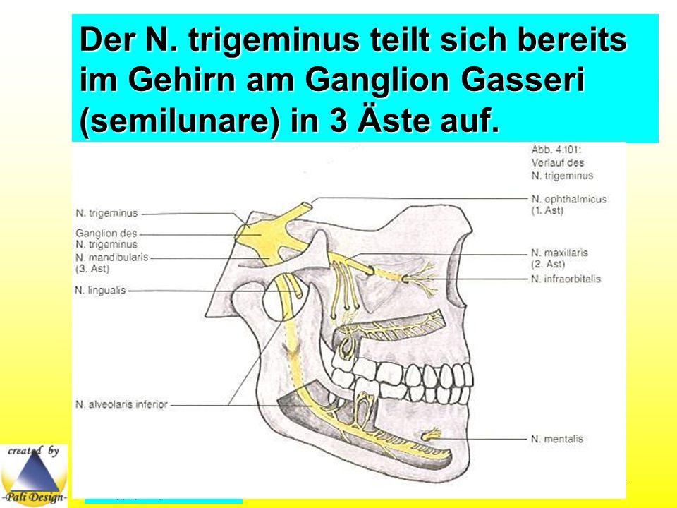 Der Nervus alveolaris inferior tritt am Foramen mentale aus dem Unterkiefer als N.
