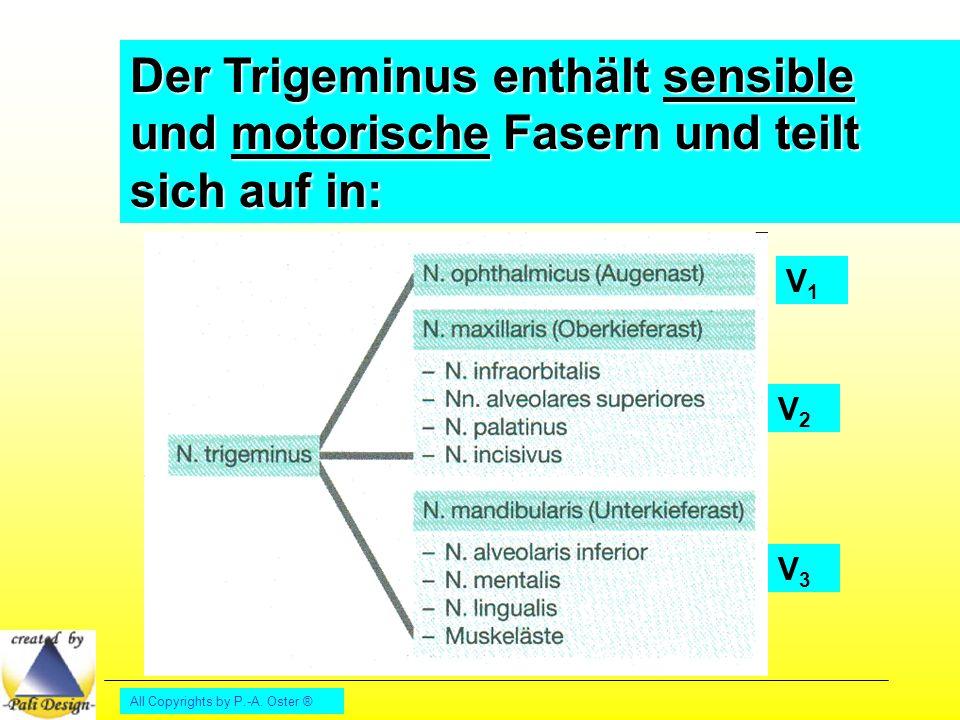Der Trigeminus enthält sensible und motorische Fasern und teilt sich auf in: V1V1 V2V2 V3V3