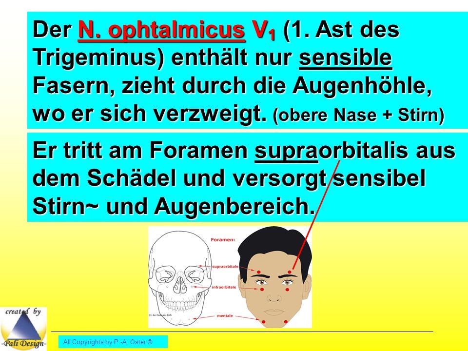 All Copyrights by P.-A. Oster ® Der Nervus facialis VII Der 7. Hirnnerv paarig angelegt
