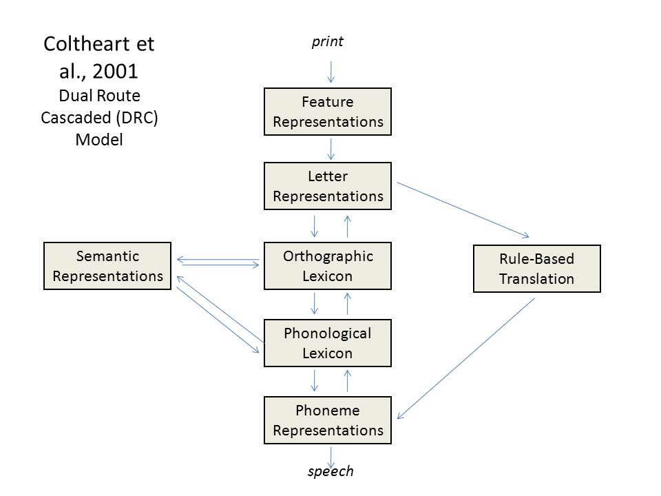 Coltheart et al., 2001 Dual Route Cascaded (DRC) Model Semantic Representations Rule-Based Translation Feature Representations Letter Representations