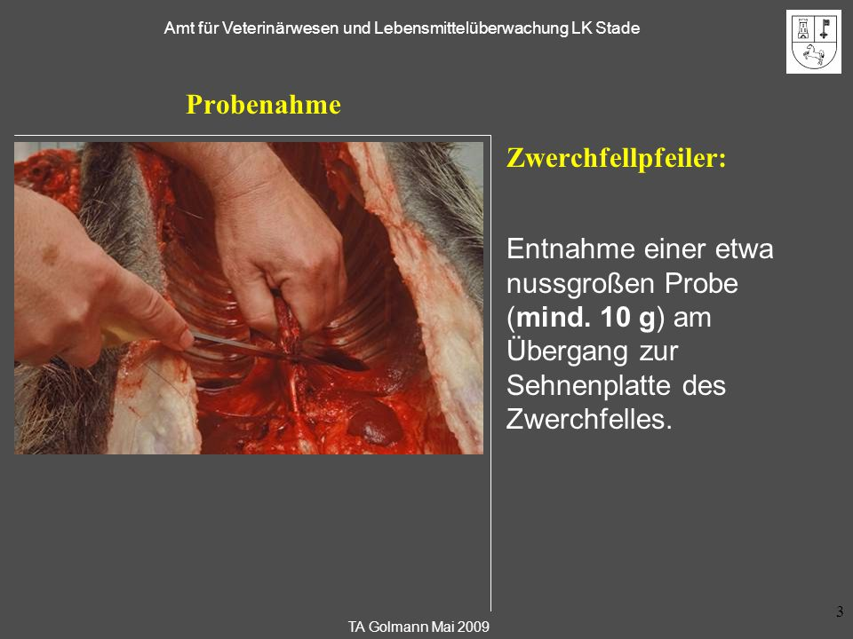 TA Golmann Mai 2009 Amt für Veterinärwesen und Lebensmittelüberwachung LK Stade 4 Probenahme Zwerchfellpfeiler: Wurde das Zwerchfell versehentlich vollständig entfernt, so verbleiben meist Reste des Zwerchfellpfeilers am Geräusch (im Mittelfeld der Lunge zwischen den Lungenflügeln).
