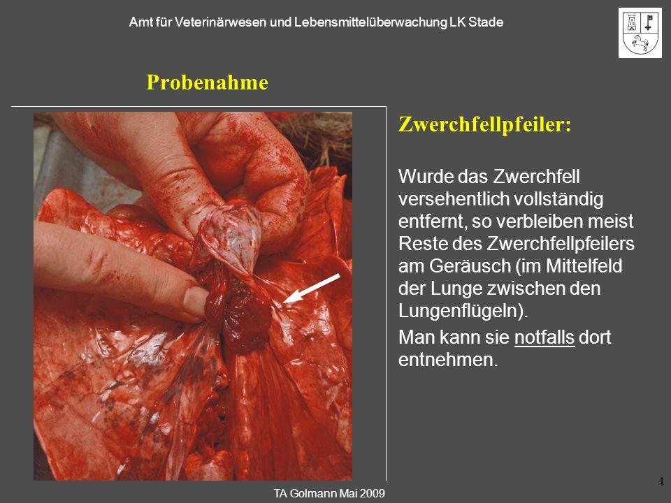 TA Golmann Mai 2009 Amt für Veterinärwesen und Lebensmittelüberwachung LK Stade 5 Probenahme - Ersatzweise Vorderarmmuskulatur: Abschärfen des Muskels am sehnigen Teil: Etwa 30 g (mind.